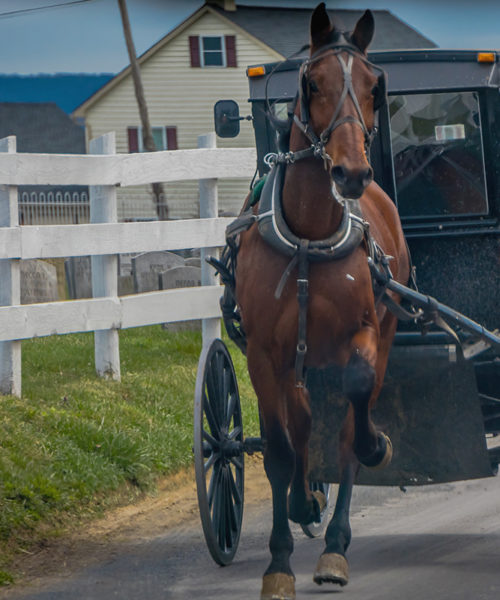 Pure Lancaster County Experience